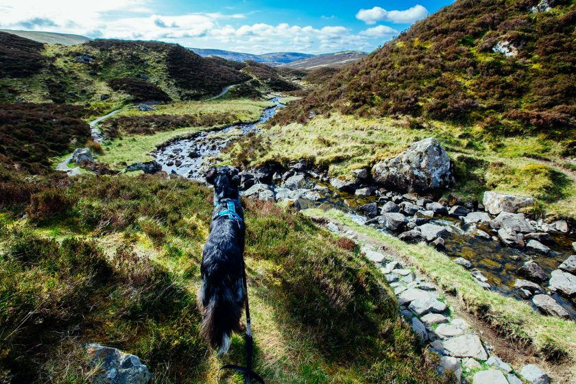 grey_mares_tail_nature_reserve_hund