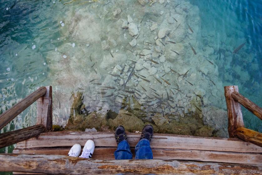 Fische im Nationalpark Plitvicer Seen