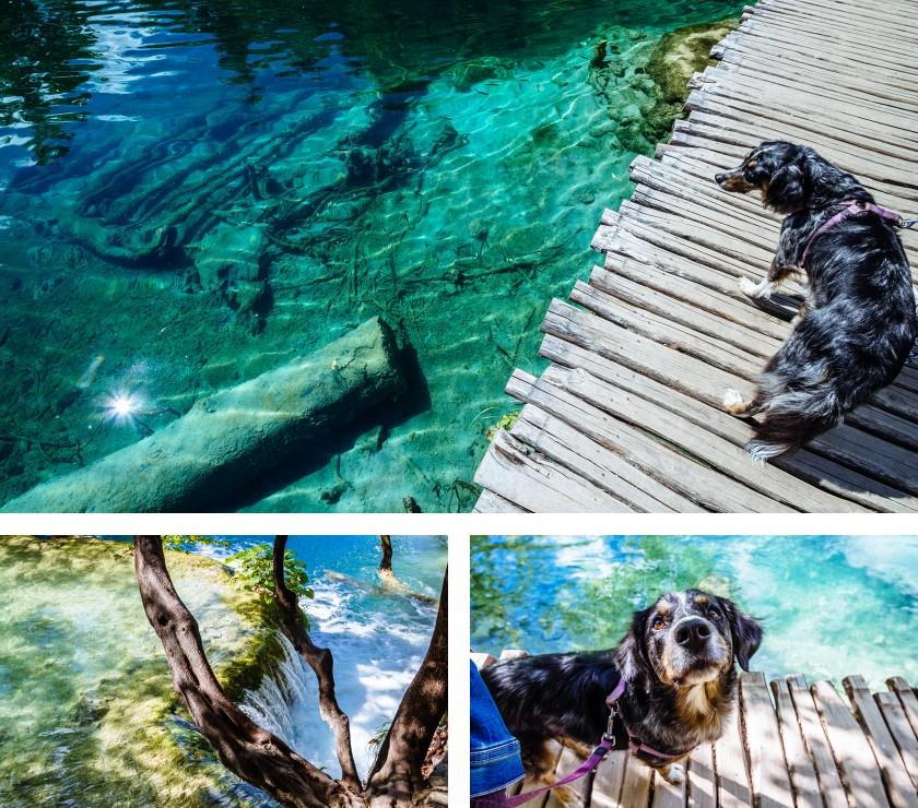 nationalpark_plitvicer_seen_hund