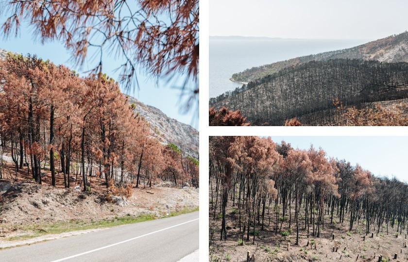 Ein völlig verbrannter Wald auf dem Weg nach Dubrovnik. Es sieht extrem unwirklich aus. Ein Holzkohle ähnlicher Geruch liegt in der Luft.