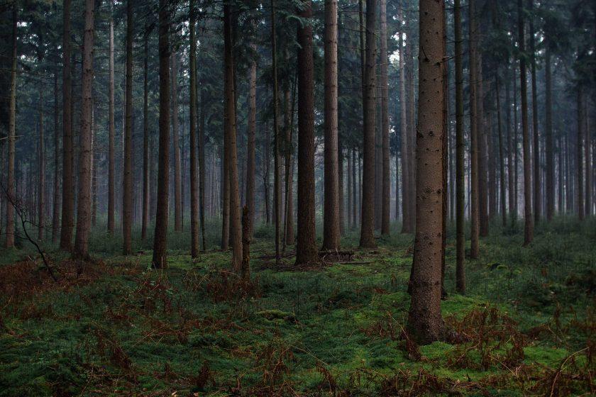 Der Holter Wald in Schloß Holte-Stukenbrock
