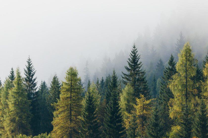 Was für ein Schauspiel wenn morgens der Dampf aus den Wäldern steigt.